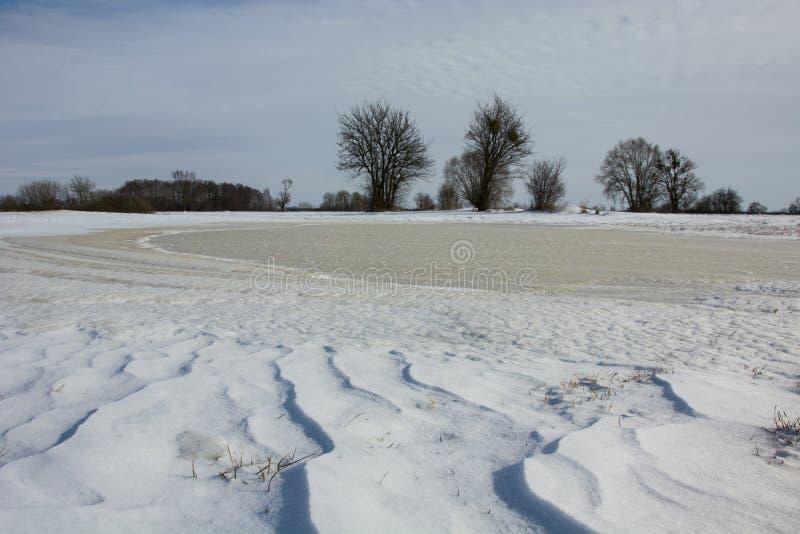 Замороженный пруд на поле стоковые изображения rf
