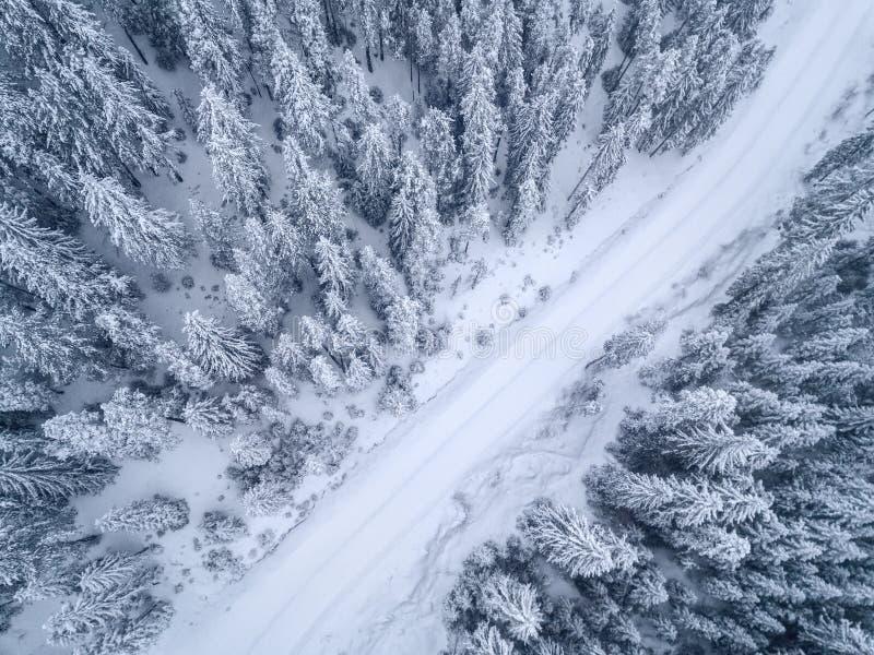 Замороженный сосновый лес от вида с воздуха стоковое изображение