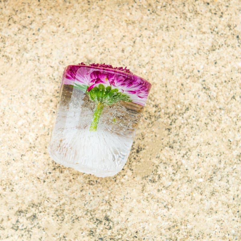 Замороженный цветок в кубе льда стоковые изображения rf