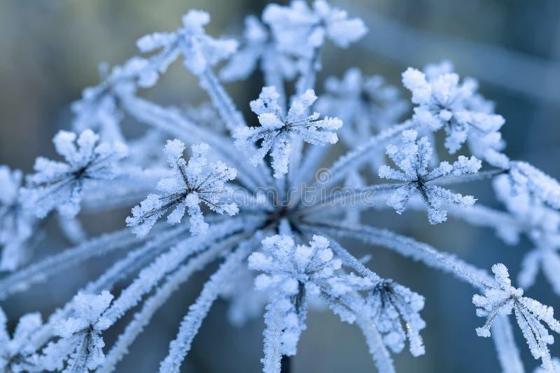 Замороженный цветок, отмелый фокус стоковые фото