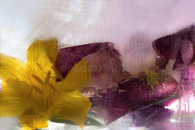 Замороженный цветок радужки стоковые изображения