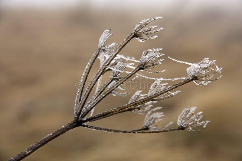Замороженный цветок стоковое фото rf