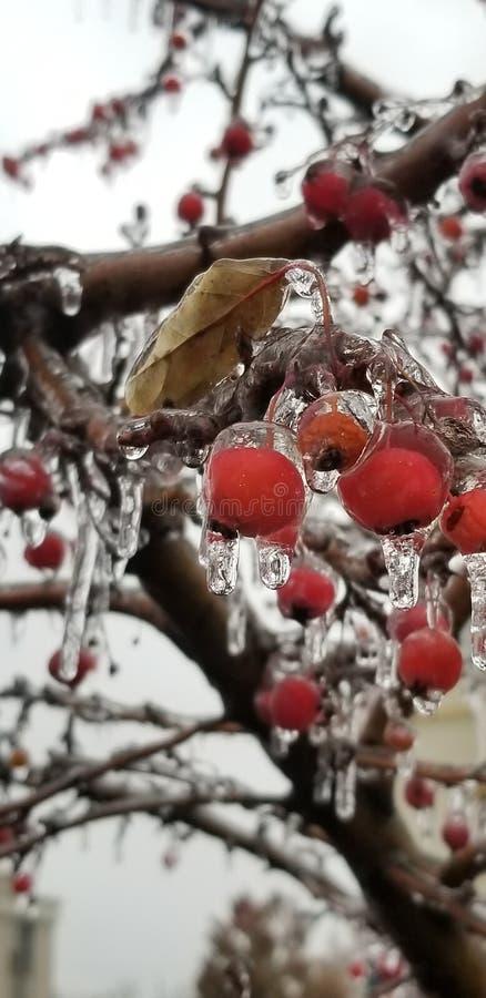 Замороженный шторм льда плода стоковые изображения