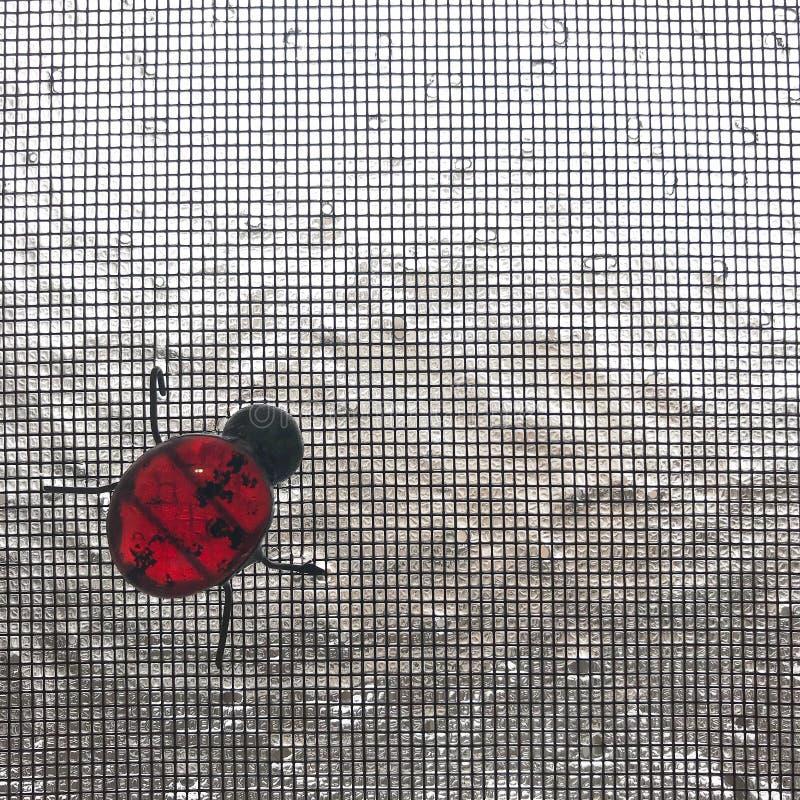 Замороженный ladybug стекла пятна стоковые изображения rf