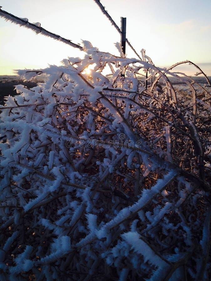 Замороженный tumbleweed с заходом солнца стоковое фото