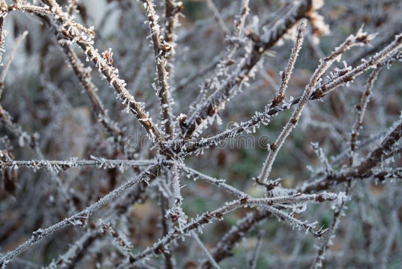 Заморозок ветвей стоковое фото