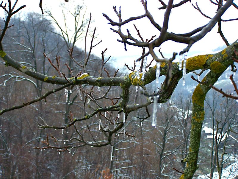 Заморозок зимы на дереве стоковая фотография