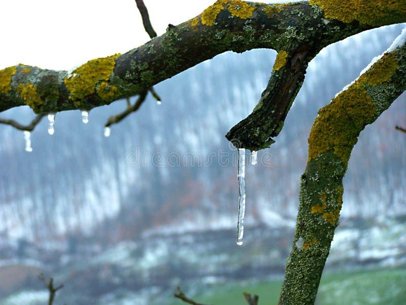Заморозок зимы на дереве стоковое фото rf