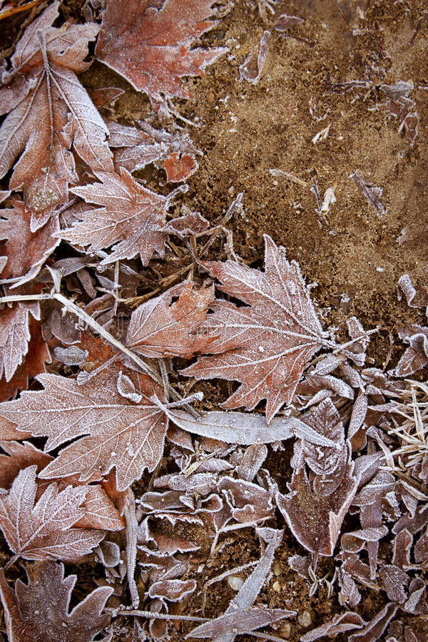 заморозок листает белизна стоковое фото