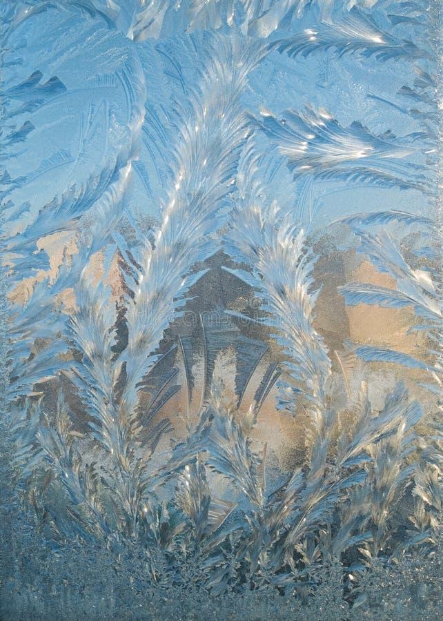 заморозок любит spruce стоковое изображение