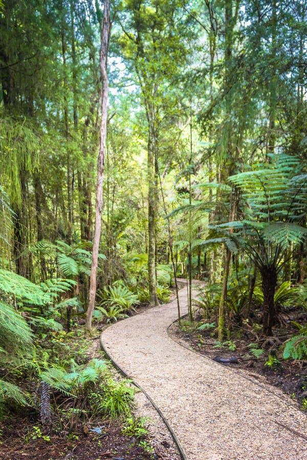 Замотка тропы через лес стоковая фотография