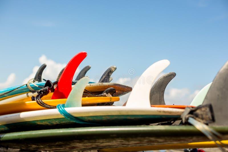 Заниматься серфингом весь день стоковая фотография