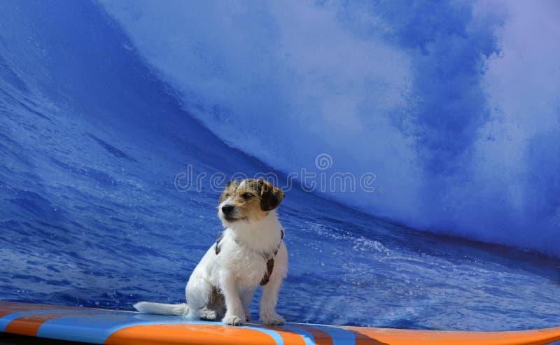 Занимаясь серфингом собака стоковые фотографии rf