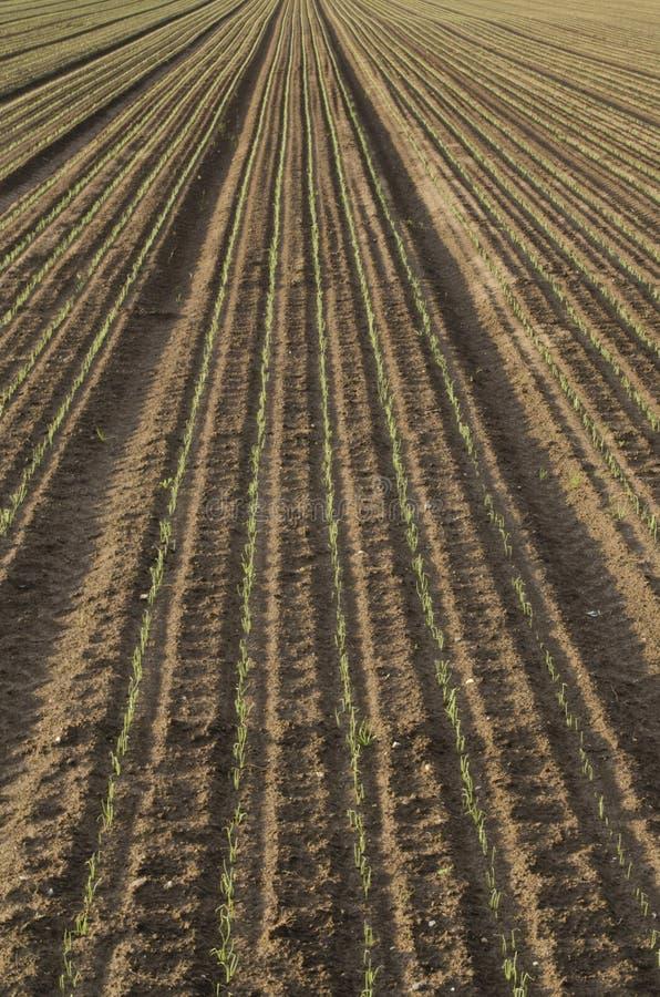 Заново засаженные семена стоковые фото