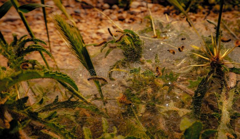 Занятая гусеница идет работать в рабочем месте конструкции гусеницы стоковое фото
