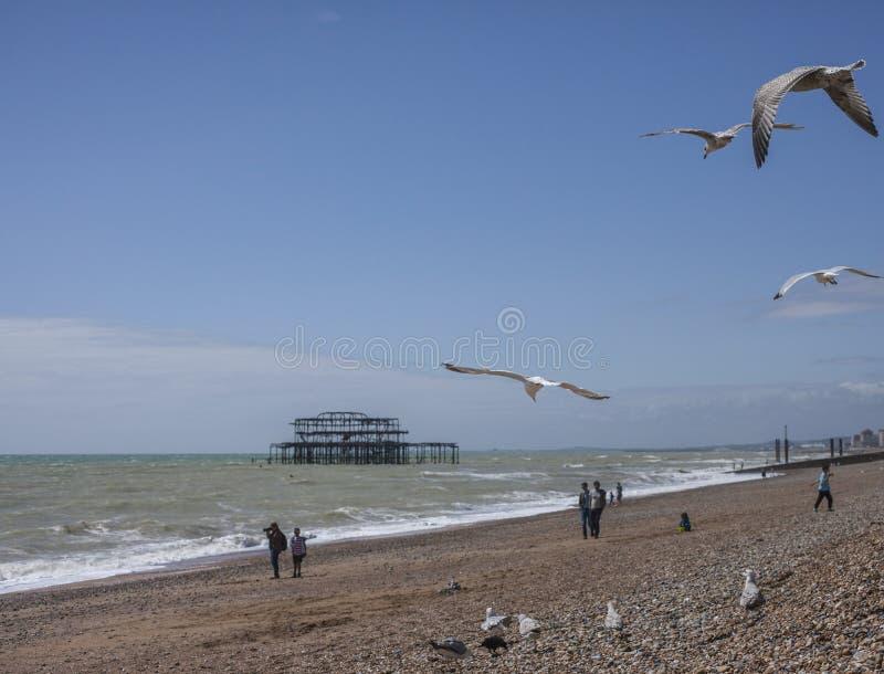 Западная пристань, Брайтон, Англия, Великобритания - чайки и люди стоковые фото