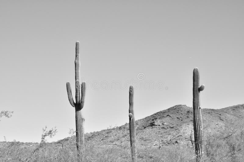 западное ландшафта пустыни старое стоковые изображения