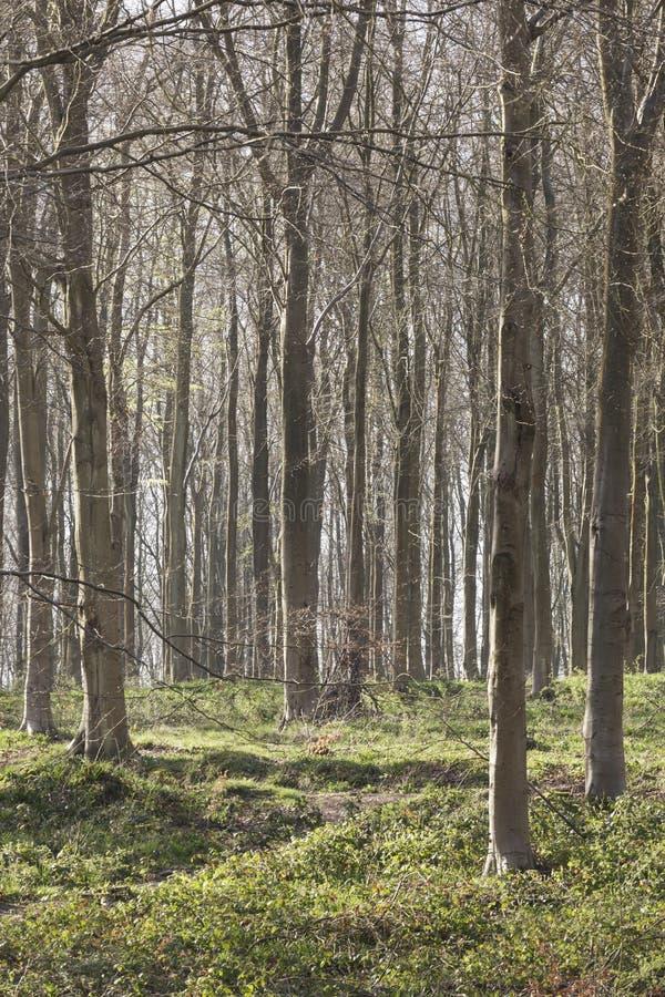 Западно-Вудская лесистая земля недалеко от Мальборо стоковая фотография rf