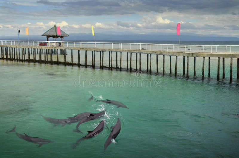 запас ozamis островка дельфина стоковое фото rf