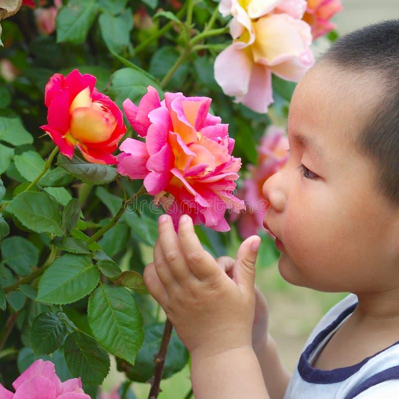 запах цветка мальчика стоковое изображение