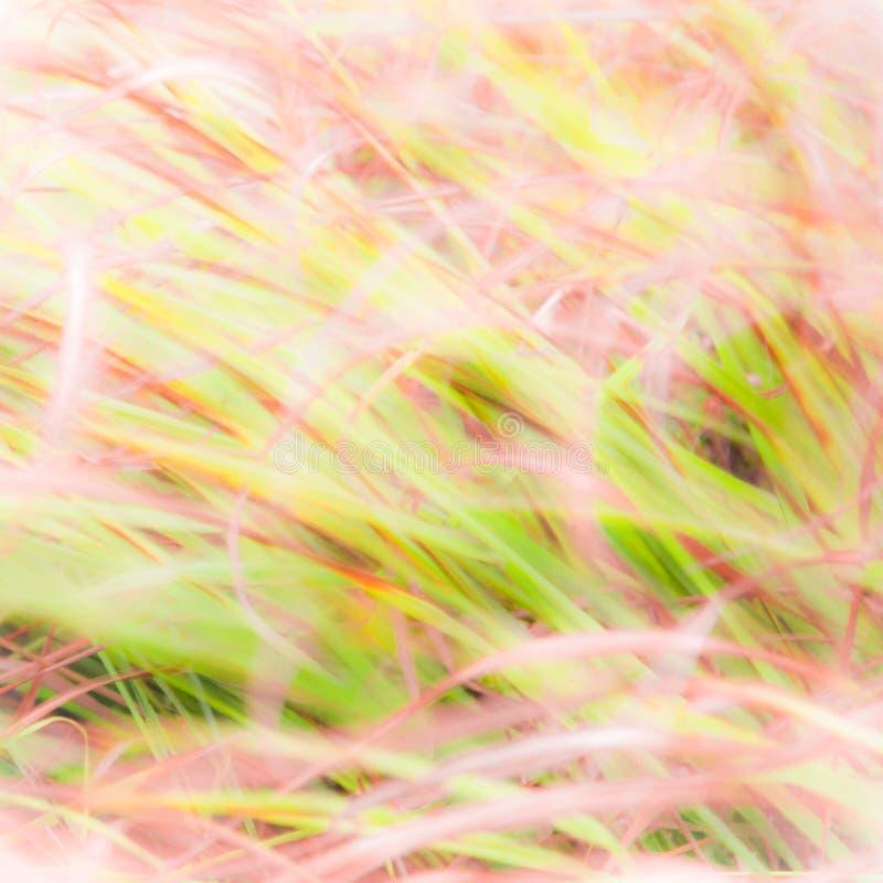 Запачканная предпосылка - абстрактный фон природы - мягкий ландшафт луга стоковые фото