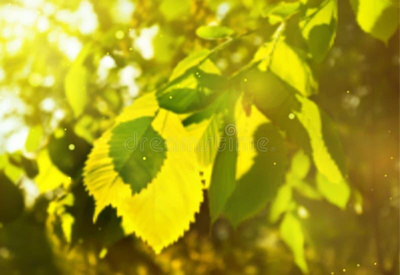 Запачканная предпосылка весны с зелеными листьями