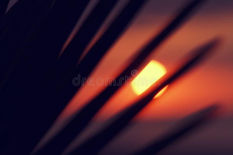 Запачканная предпосылка диска солнца лета тропическая на заходе солнца через ветвь ладони на предпосылке моря и красочного неба в стоковое изображение rf