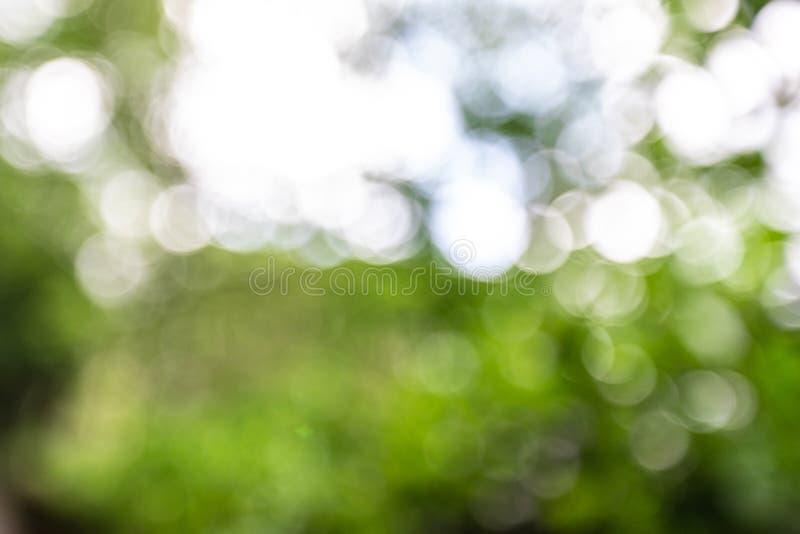 Запачканная предпосылка с зелеными листьями и солнечным светом стоковая фотография rf