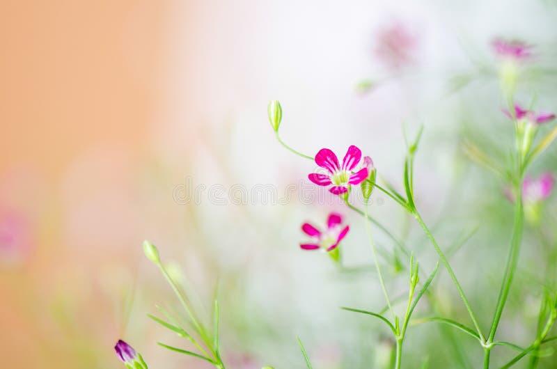 Запачканная предпосылка цветка, абстрактная предпосылка нерезкости стоковое фото