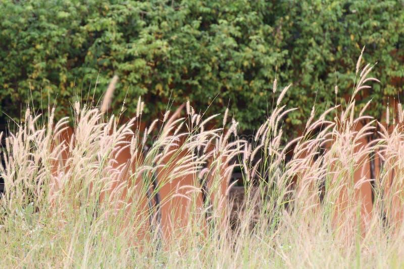 Запачканная трава цветет предпосылка, конспект цветков сена травы обоев стоковое фото rf