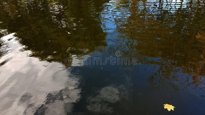 Запачканное отражение ландшафта парка в ровной волнистой поверхности воды стоковая фотография