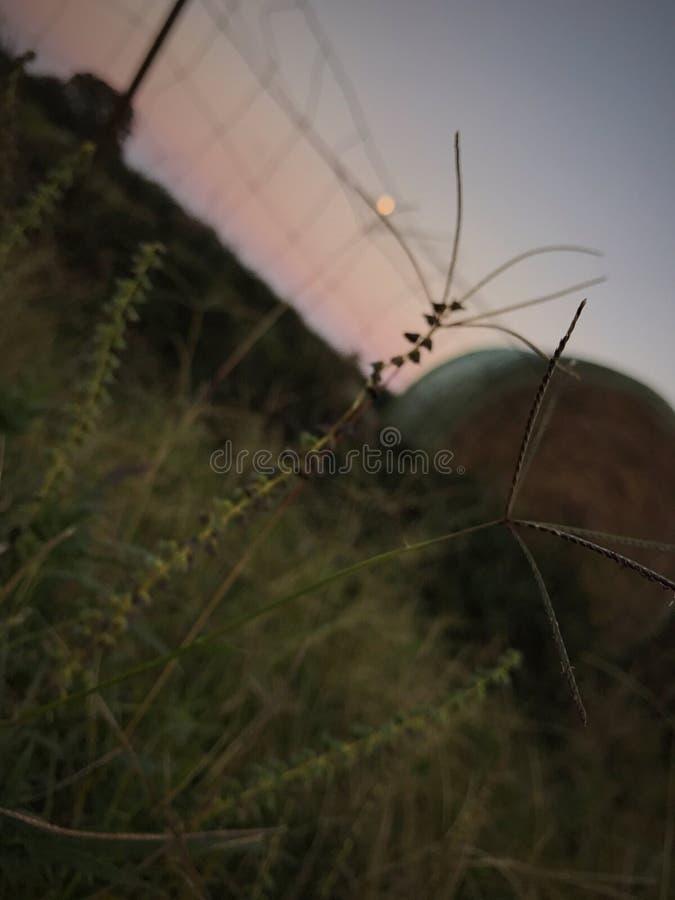 Запачканное сено стоковое фото rf