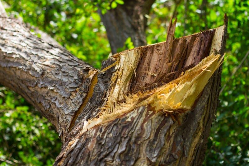 Запачканные листья сорванные пнями стоковое фото rf