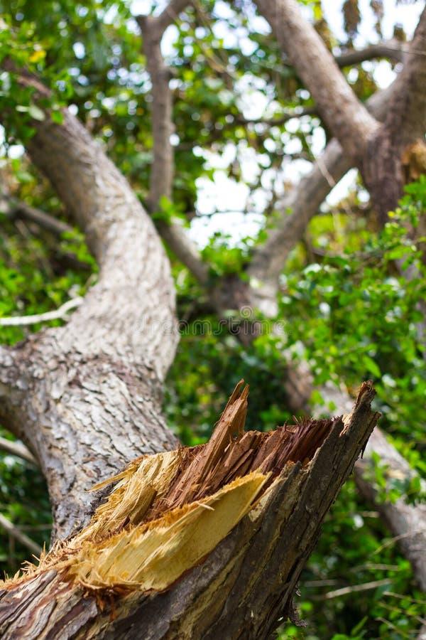 Запачканные листья сорванные пнями стоковая фотография rf