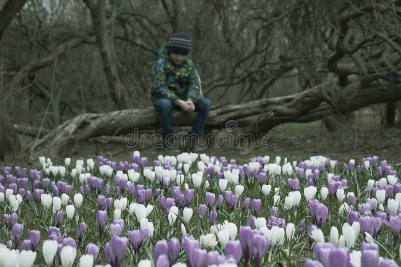 Запачканный грустный мальчик сидя на упаденном дереве в темном парке, много цветков крокуса перед им - он apathic, угрюмый, безра стоковое фото rf