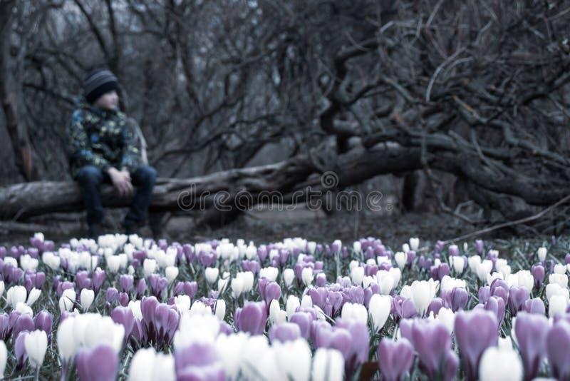 Запачканный грустный мальчик сидя на упаденном дереве в темном парке, много цветков крокуса перед им - он apathic, угрюмый, безра стоковое изображение