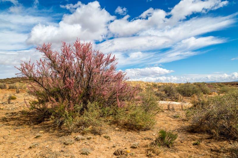 Западная ясная заводь Аризона весной стоковое изображение rf