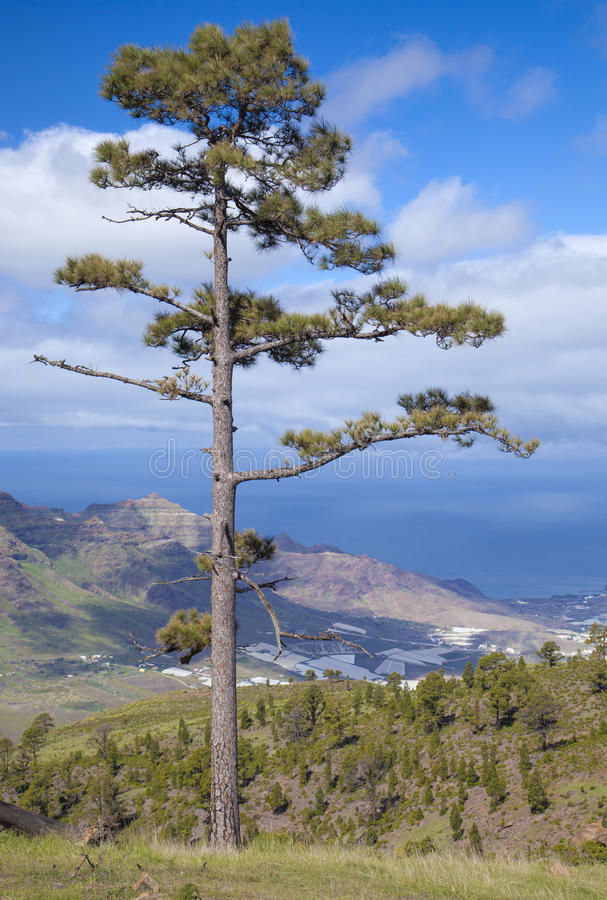 Западное Gran Canaria в феврале стоковая фотография rf