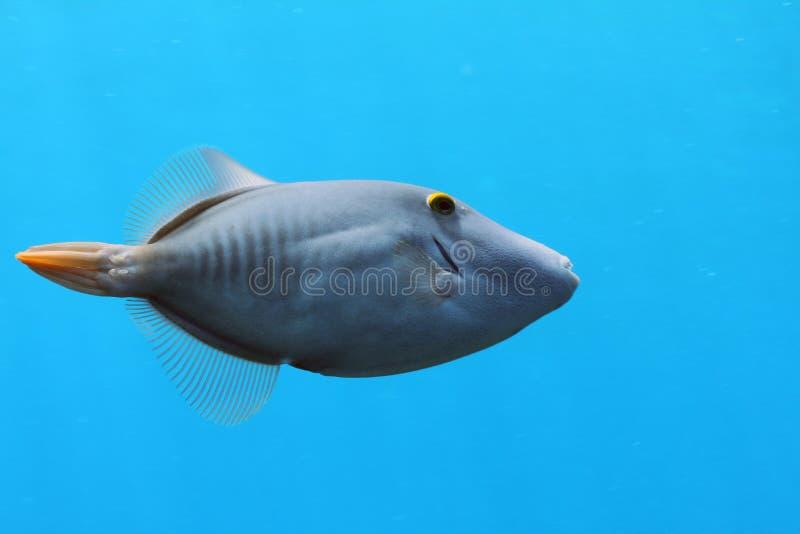 запертый filefish стоковое фото rf
