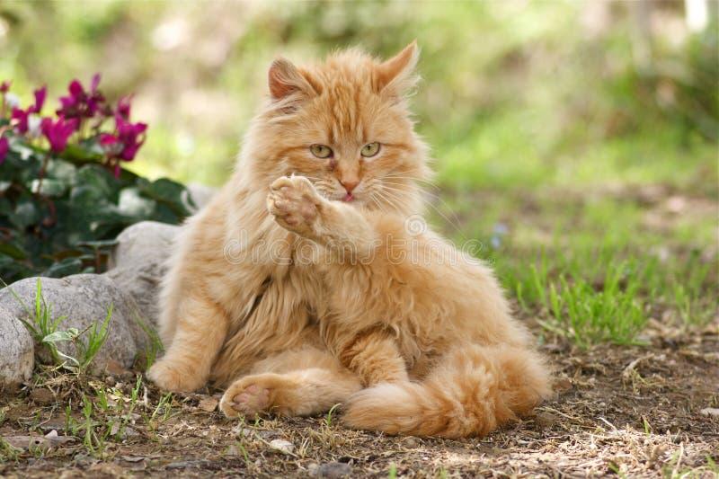 запиток кота стоковое изображение