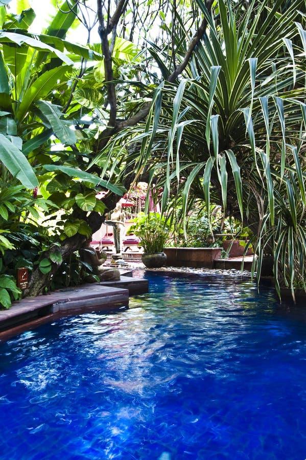 заплывание бассеина тропическое стоковые изображения rf