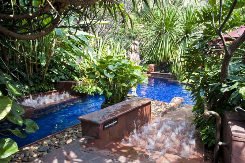 заплывание бассеина тропическое стоковые изображения