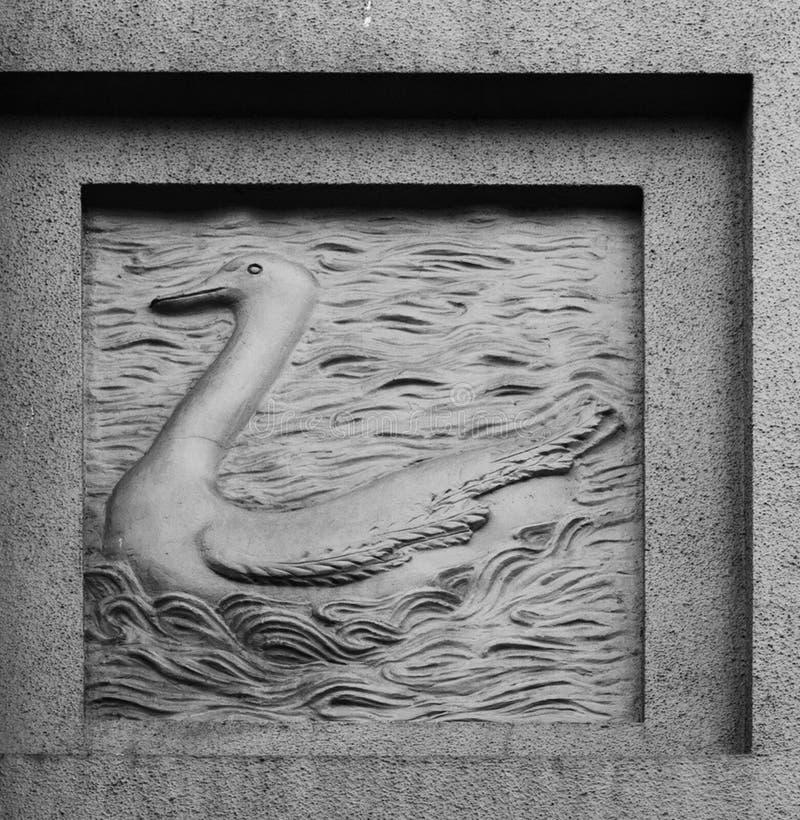 Заплывание лебедя на озере стоковая фотография rf