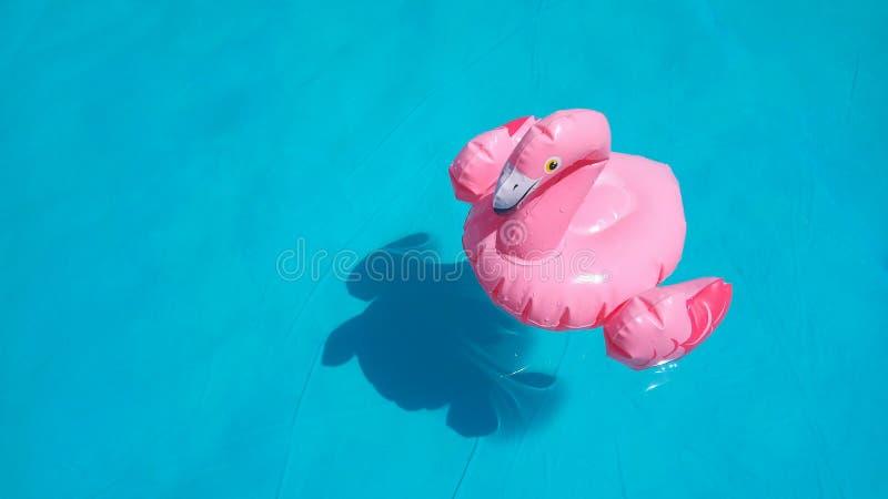 Заплывы фламинго пинка игрушки раздувных детей в ясной голубой воде бассейна бирюзы Место для текста, космоса экземпляра стоковое фото rf
