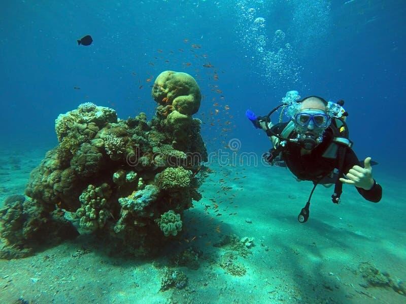 Заплыв водолаза под водой стоковые изображения rf