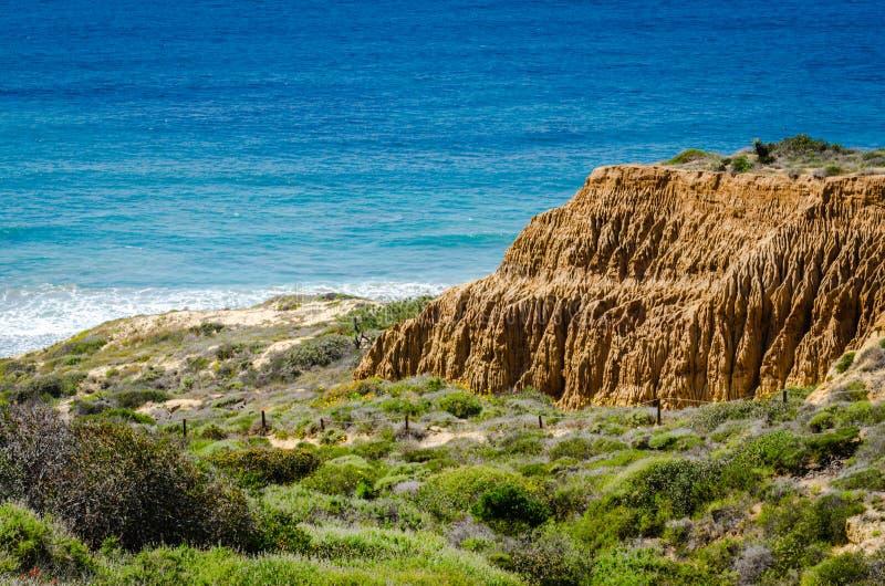 Заповедник положения сосен Torrey естественный - Калифорния стоковые фото