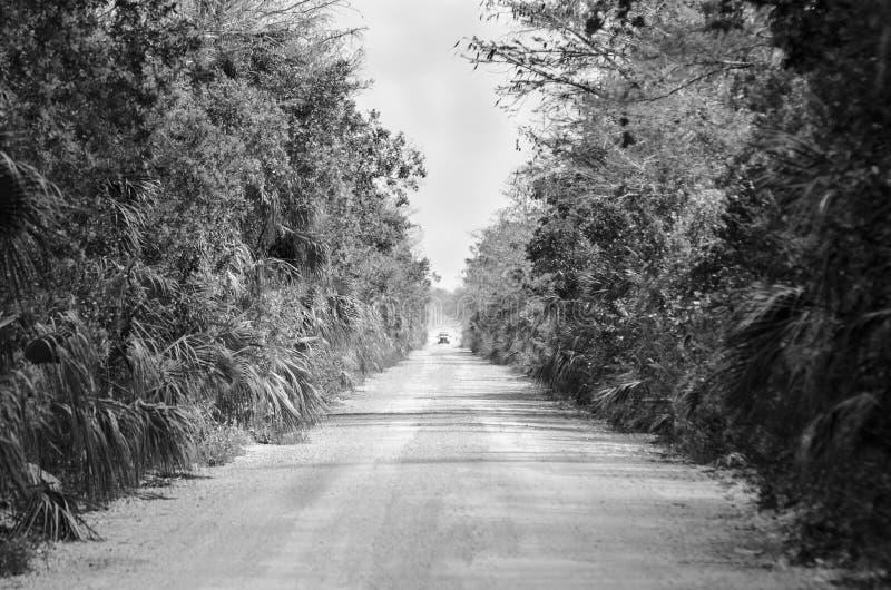 Заповедник Cypress надвигающийся грязной улицы тележки большой национальный стоковые фотографии rf