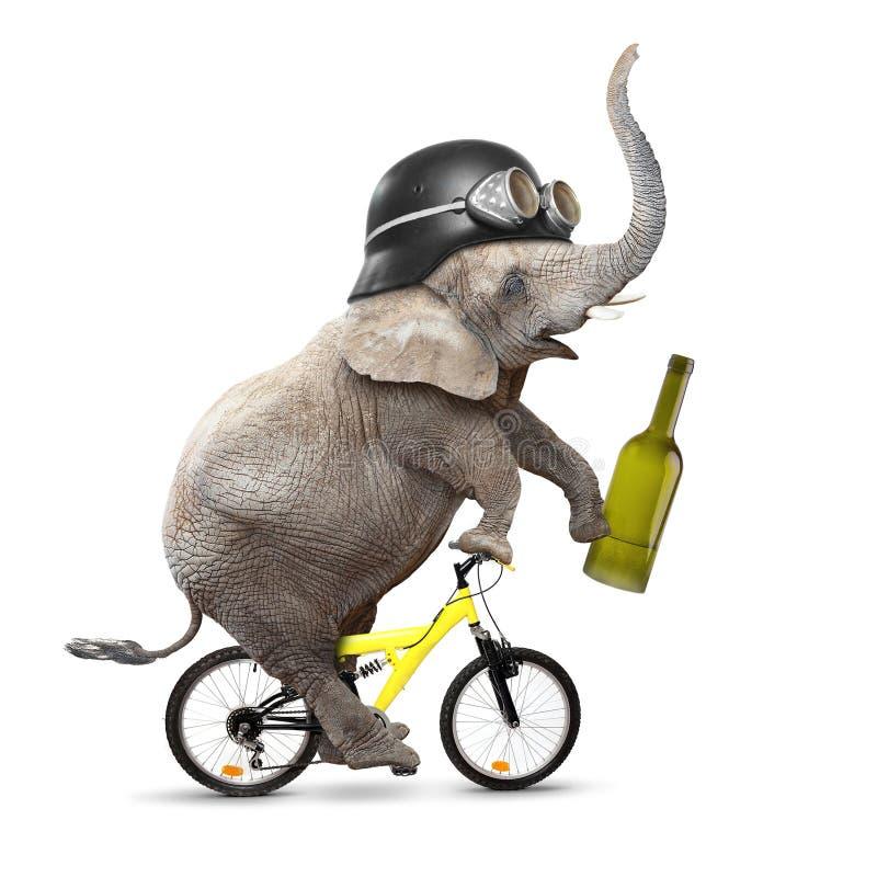 Запойный слон. стоковые фото