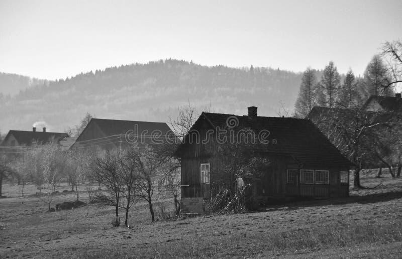 заполированность лужка лошадей сельской местности стоковые фото