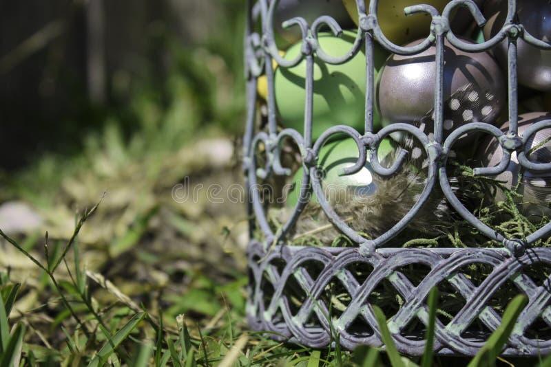Download Заполненная яичком клетка птицы Стоковое Фото - изображение насчитывающей трава, древесина: 40585246